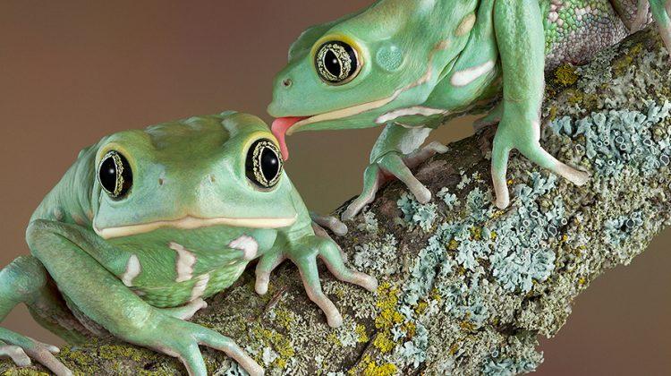 Nicht jeder hat einen Frosch, den er küssen kann © iStock / getty images