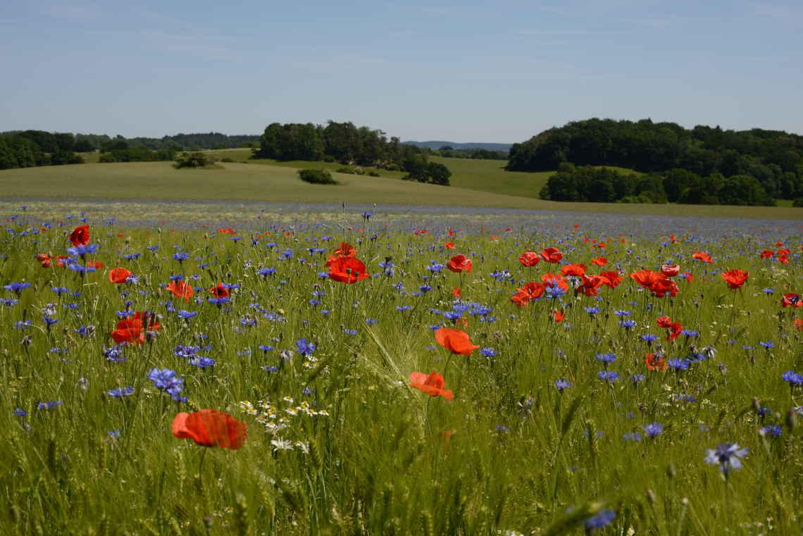 biologische Landwirtschaft mit Vielvalt von Blumen und kräutern