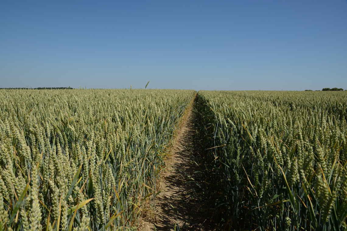 Felder ökologische bio landwirtschaft und konventioneller Acker