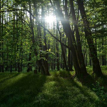 Nationalpark Spessart: Das größte zusammenhängende Laubmischwaldgebiet Deutschlands © iStock / Getty Images