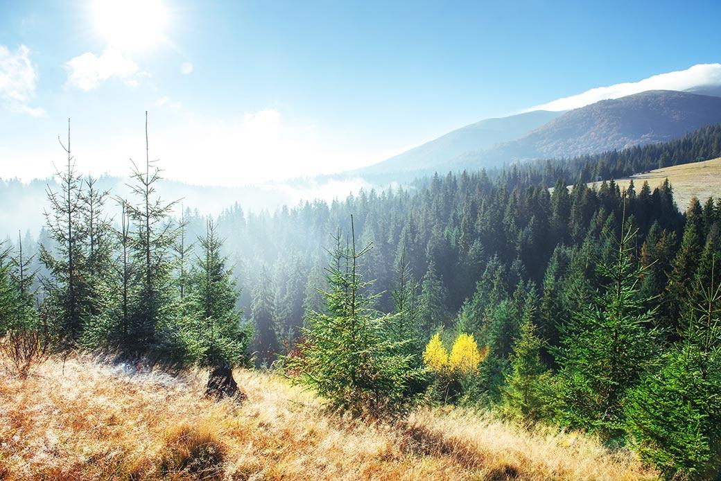 Deutsche Wälder sind vom Klimawandel bedroht