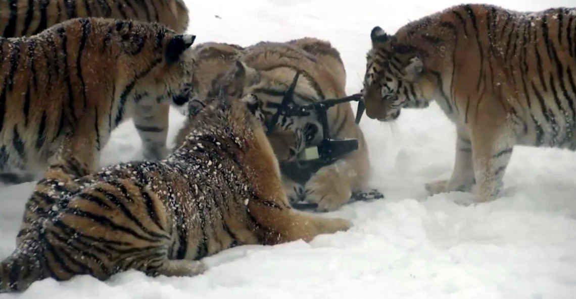 Screenshot der Tiger mit der Drohne