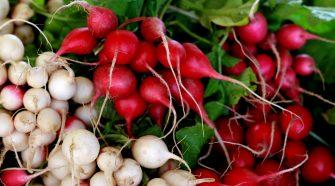 Radieschen Gemüse des Monats
