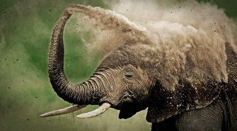 Erfolg für das Weltnaturerbe Selous –Da freut sich nicht nur der Elefant! © Martin Harvey / WWF