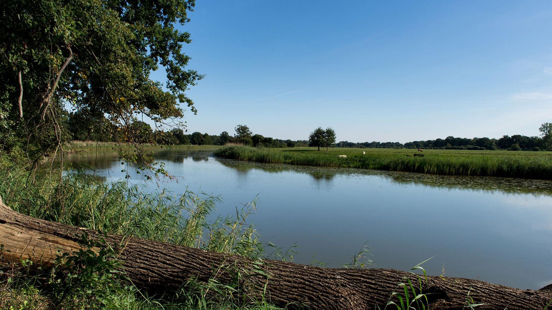 Auwälder, Stromtalwiesen und ein weiter, ruhiger Fluss. Die Mittelelbe: Die wertvolle Natur, die der WWF in Deutschland schützt, ist natürlich auch sehenswert als Ausflugstipp und Reiseziel.