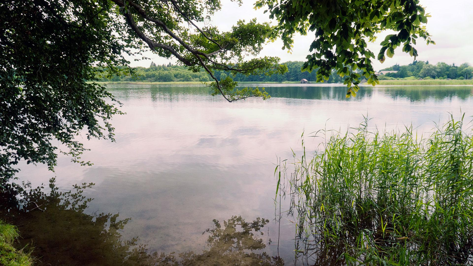 Sehenswerte Natur in Deutschland: Abgeschiedene Buchten, sauberes Wasser und Seeadler gibt es am Schaalsee.