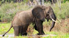 "Zero Poaching, ""null Wilderei"" ist das Ziel im Selous. © iStock / Getty"