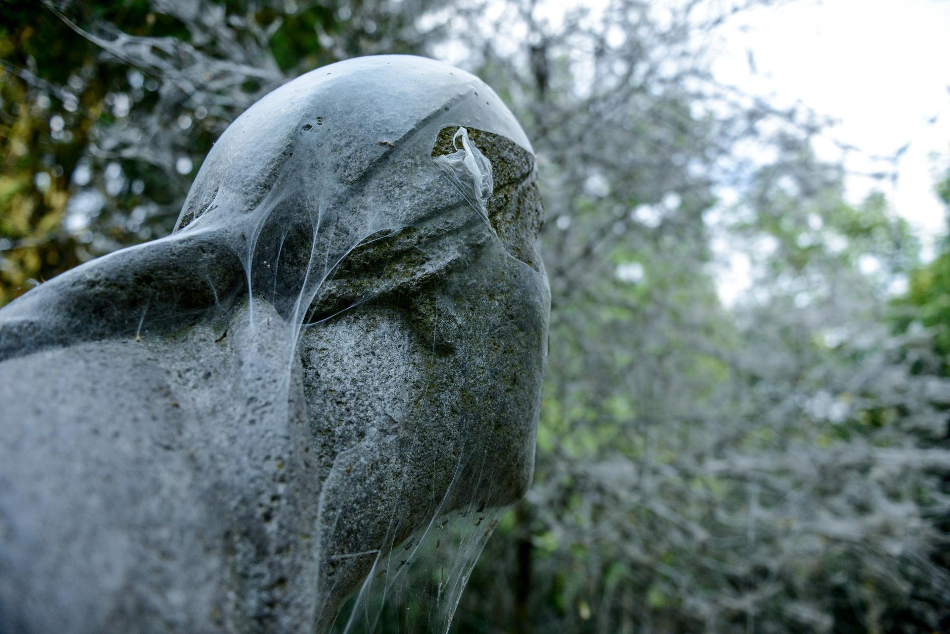 Die Gespinstmotten machen auch nicht Halt vor Steinstatuen. © Peter Jelinek