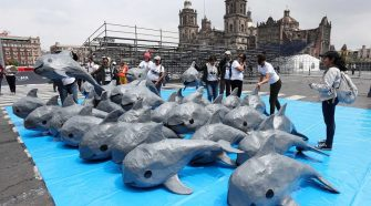 """Am """"Vaquita Day"""" wurden über 220.000 Unterschriften an den mexikanischen Präsidenten überreicht. © WWF Mexico"""