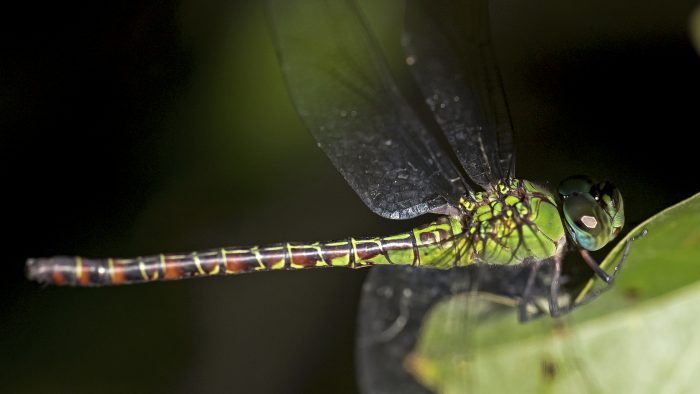 Libelle Bolivien © Gesa Koch-Weser / WWF Deutschland