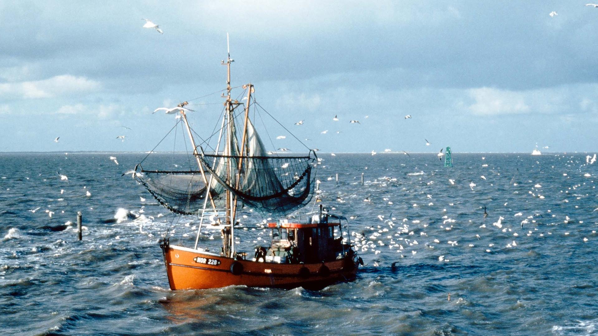 Fischfang auf der Nordsee ist auch nicht immer nachhaltig