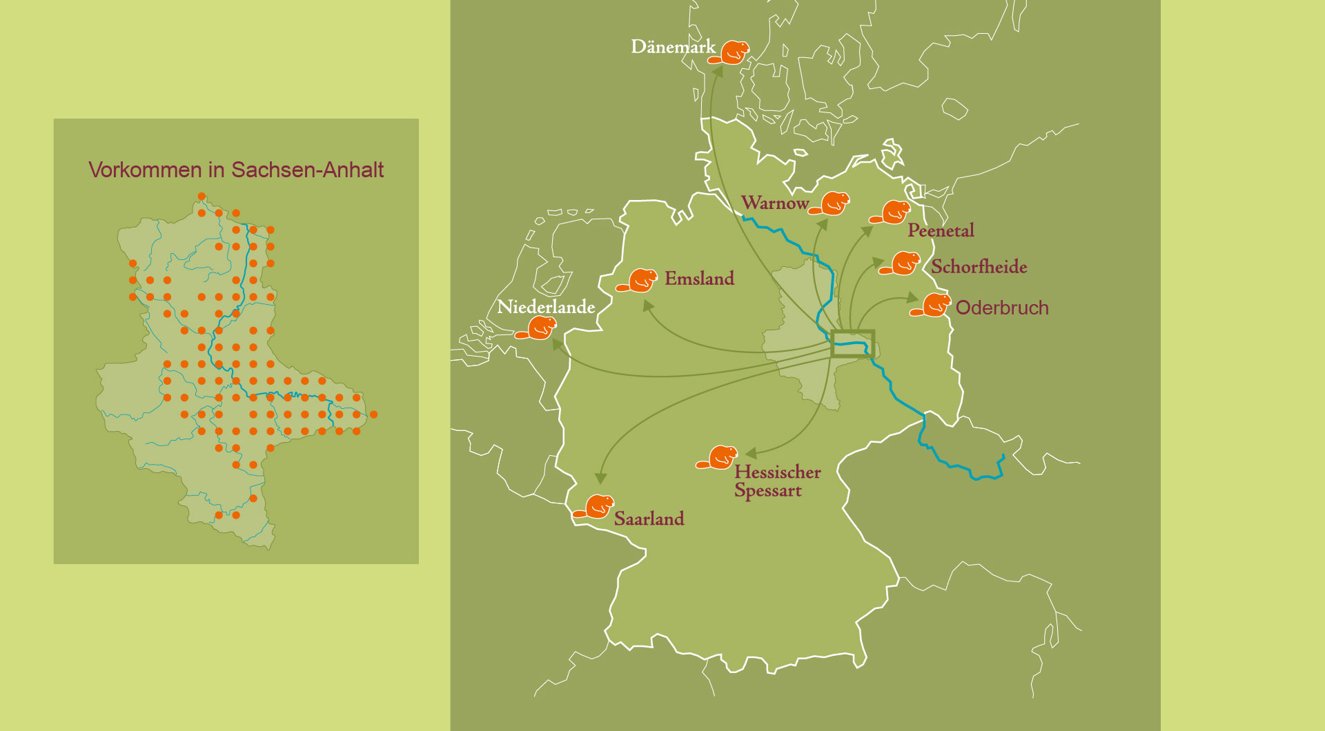 Die Verbreitung des Elbebibers © Biosphärenreservat Mittelelbe