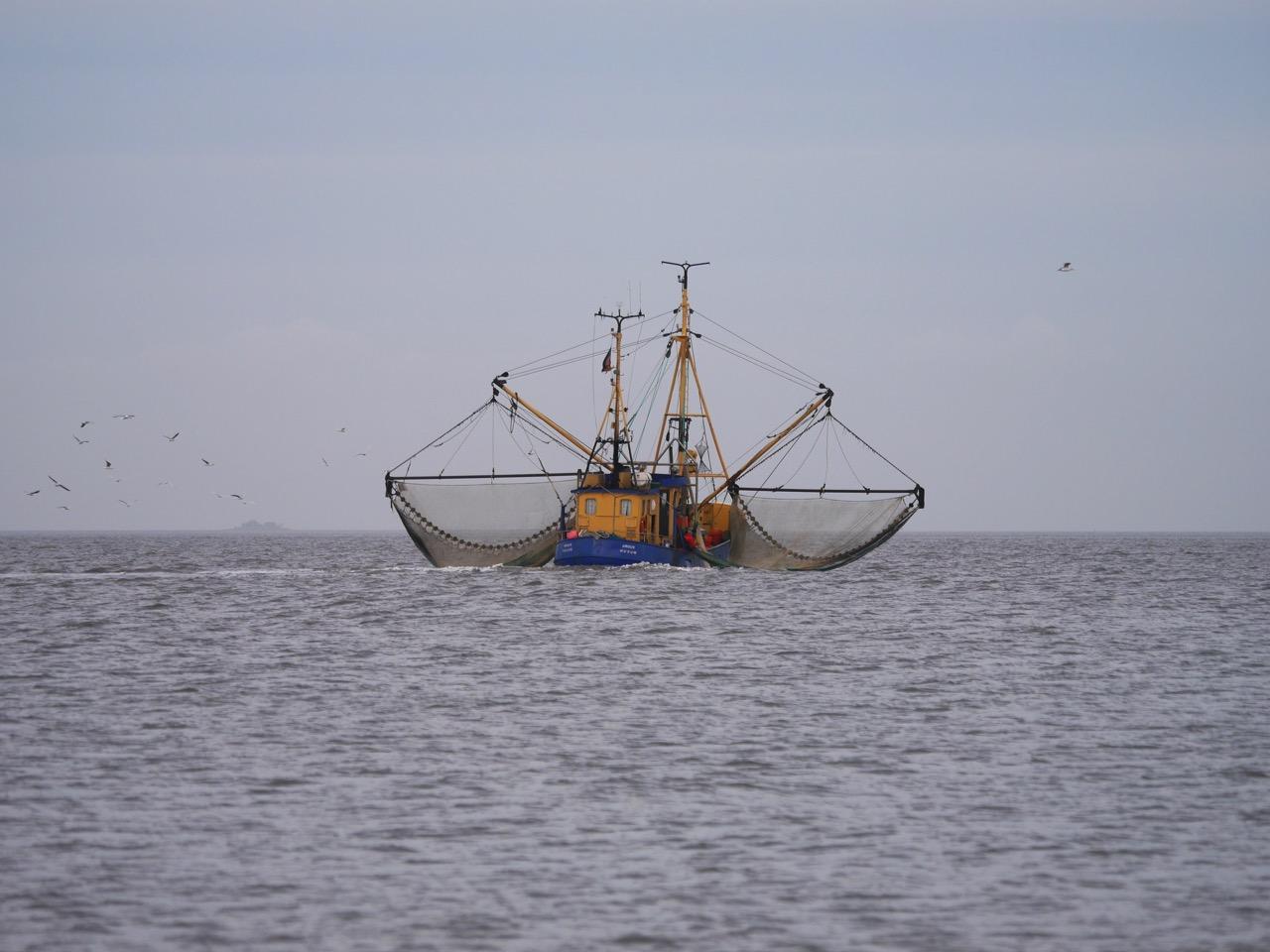 Der WWF hat Einspruch gegen die MSC-Zertifizierung der Krabbenfischerei eingelegt © Hans-Ulrich Rösner