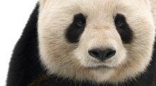 © naturepl.com / Edwin Giesbers / WWF