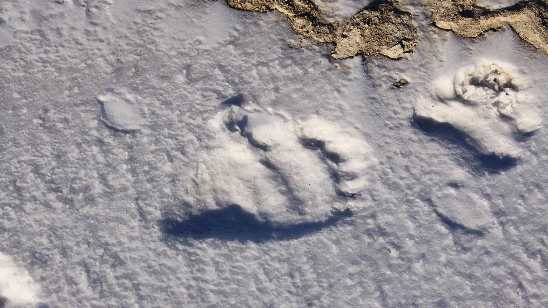 Den Eisbären auf der Spur. © Melanie Gömmel / WWF