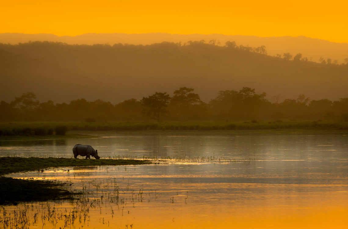 Nashorn am Fluss: Tigerschutz bedeutet Landschaftsschutz