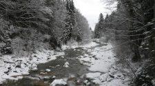 Ammer in Schnee und Eis