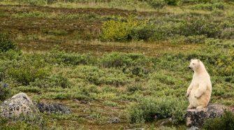 Die Klimaziele sind wichtig! Denn der Klimawandel bedroht die Eisbären: Ohne Eis in der Arktis können sie nicht überleben. © Michael Poliza / WWF