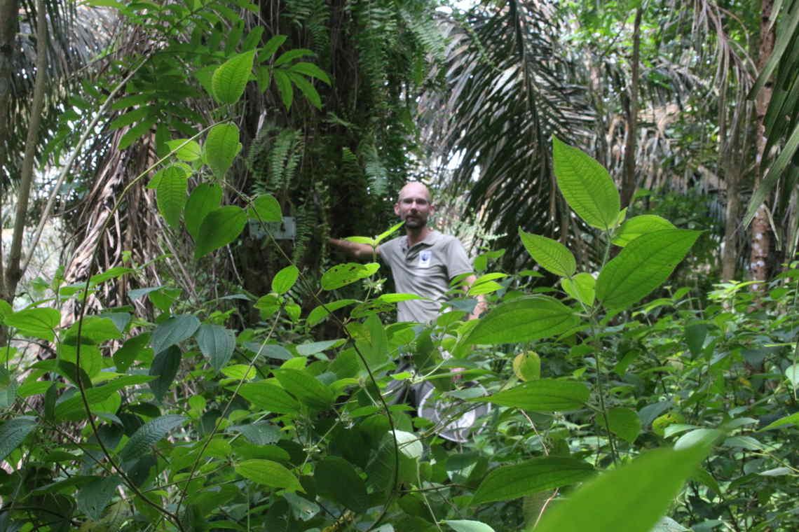 Palmöl: Markus wolter auf der Versuchsfläche