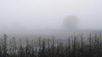 Elbe: Winterlich mystische Elbauen