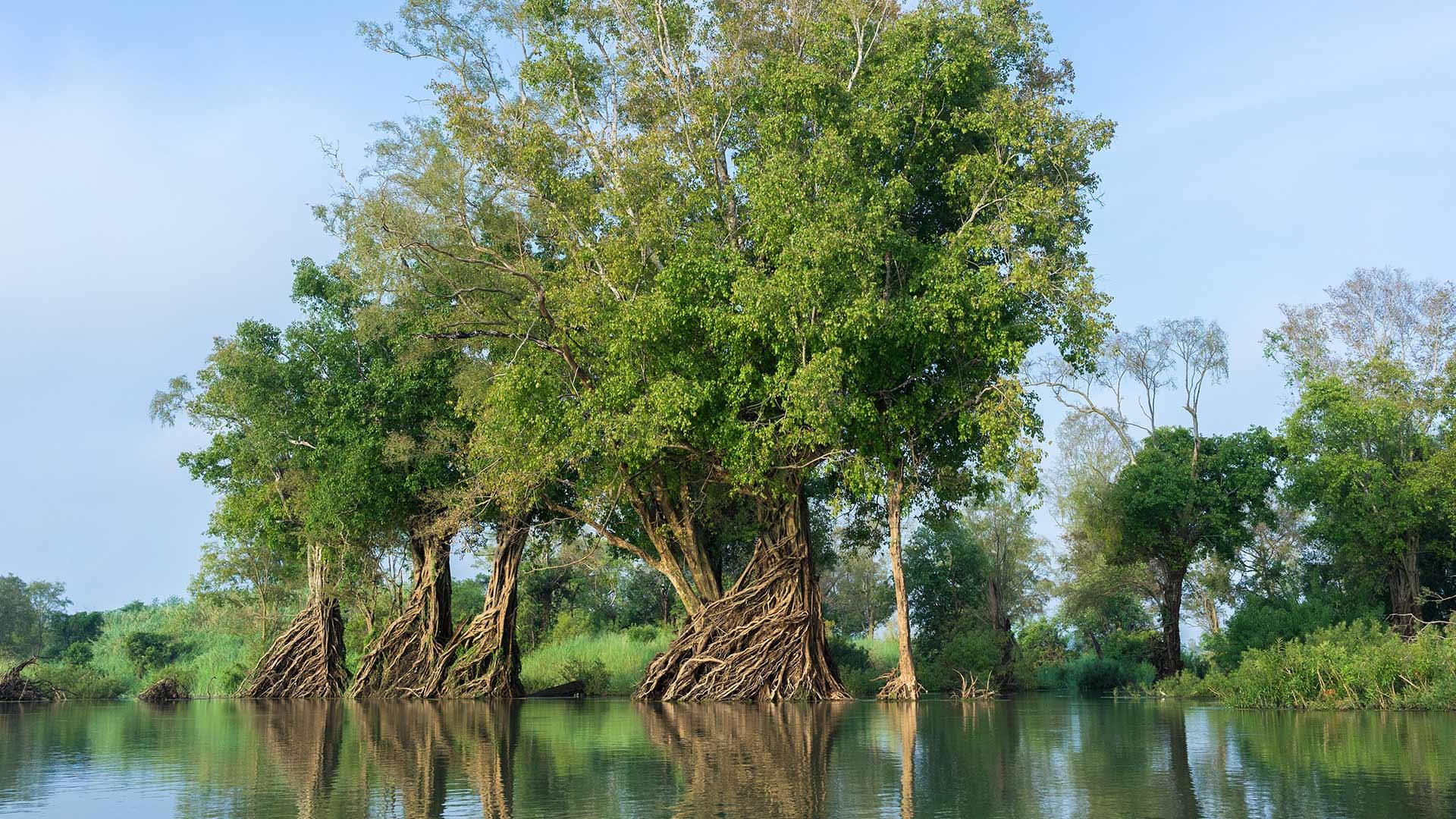 Gegen die Wasserkrise hilft vor allem der Schutz von Feuchtgebieten wie hier am Mekong