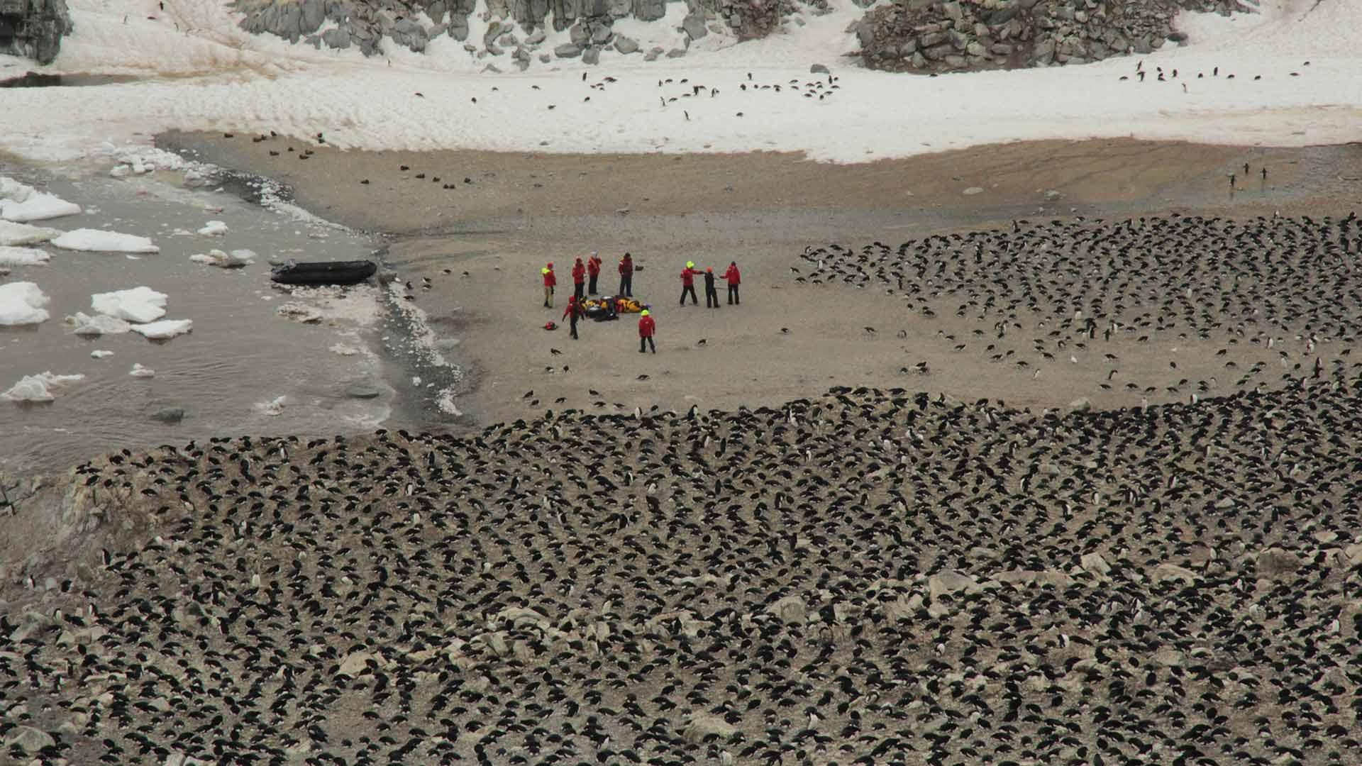 Wissenschaftler in einer Kolonie der Pinguine