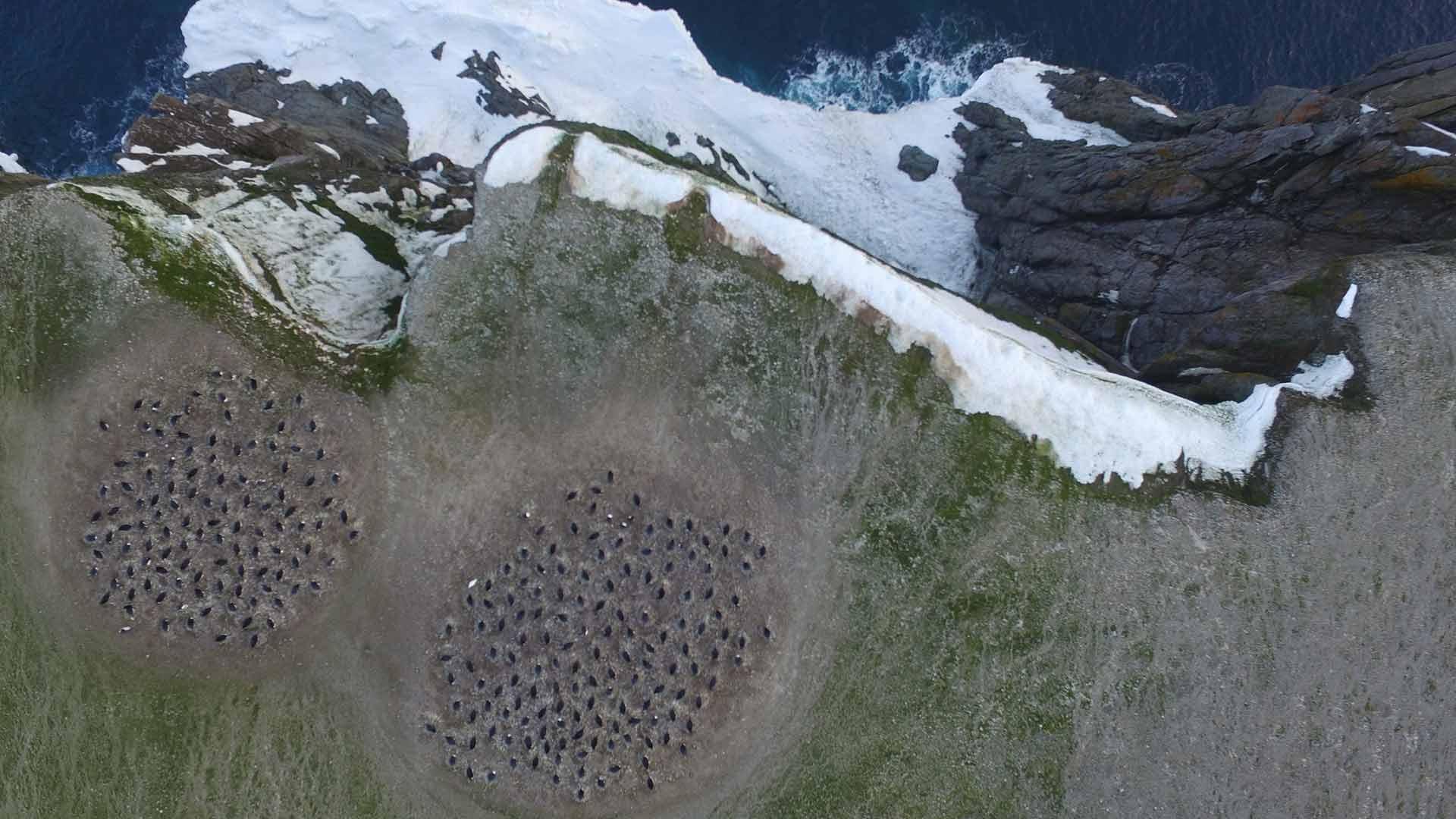 Luftaufnahme der Pinguine auf Danger Island