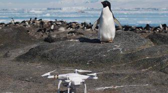 Pinguin und Drohne auf Danger Island