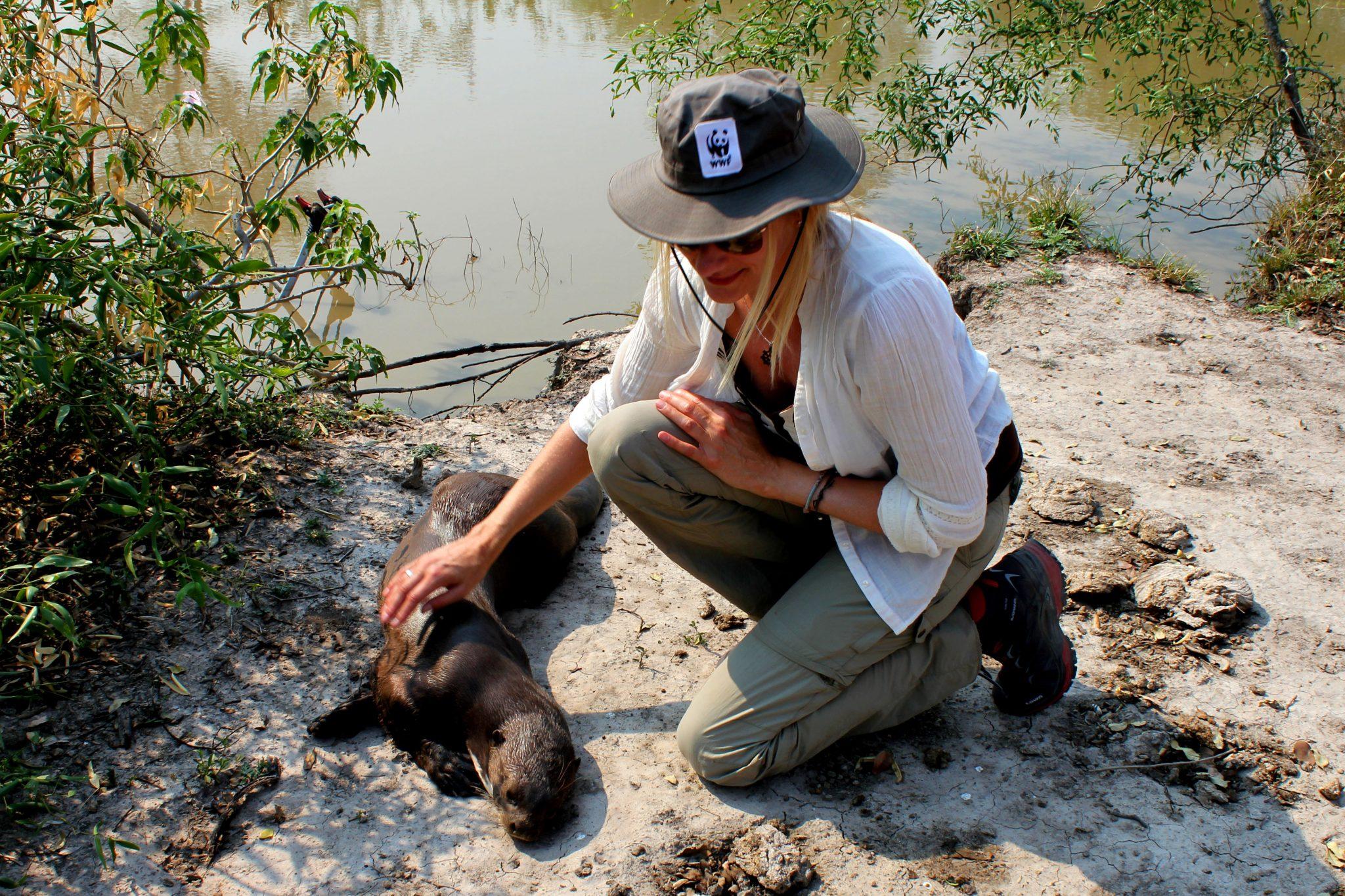 Normalerweise sind die Riesenotter nicht so zutraulich wie dieses zahme Exemplar. © WWF Paraguay