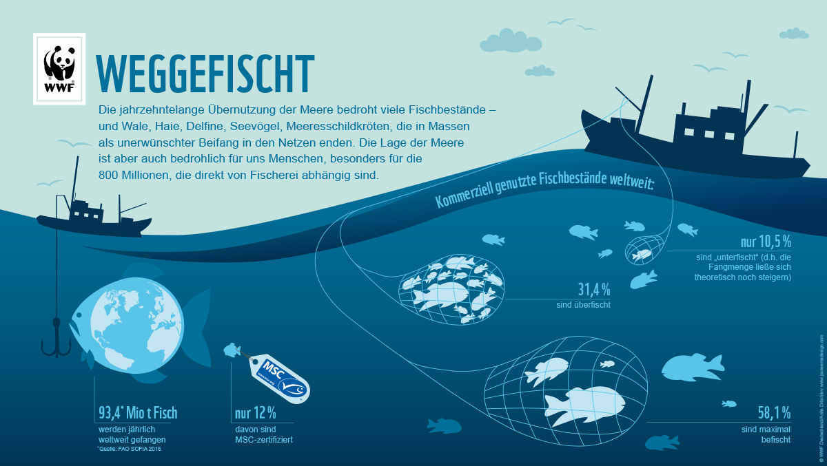 Fischfang Grafik Weggefischt