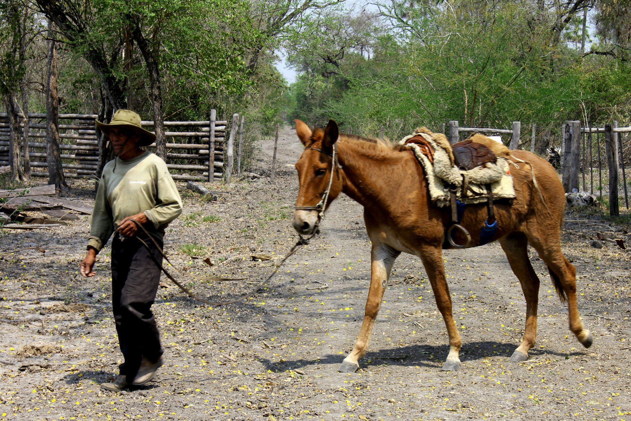 Die Weidewirtschaft ist eine der wichtigsten Industriezweige im Pantanal. © WWF / Ilka Petersen