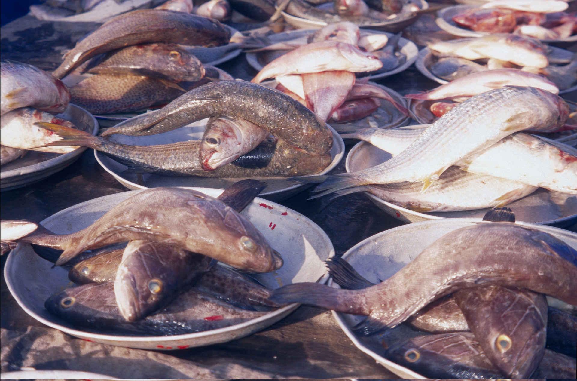 Fischfang: Fischmarkt in Dakar, Senegal