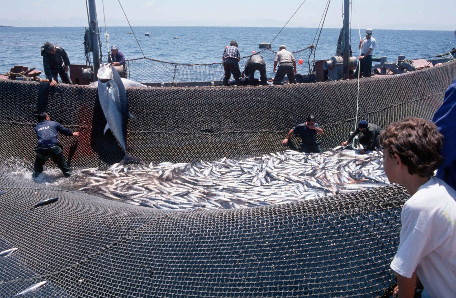Fischfang von Rotem Thunfisch in Spanien