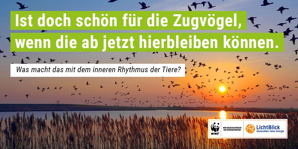 Ändern sich durch den Klimawandel auch die Verhaltensweisen der Zugvögel? © eurotravel / getty images © eurotravel / getty images