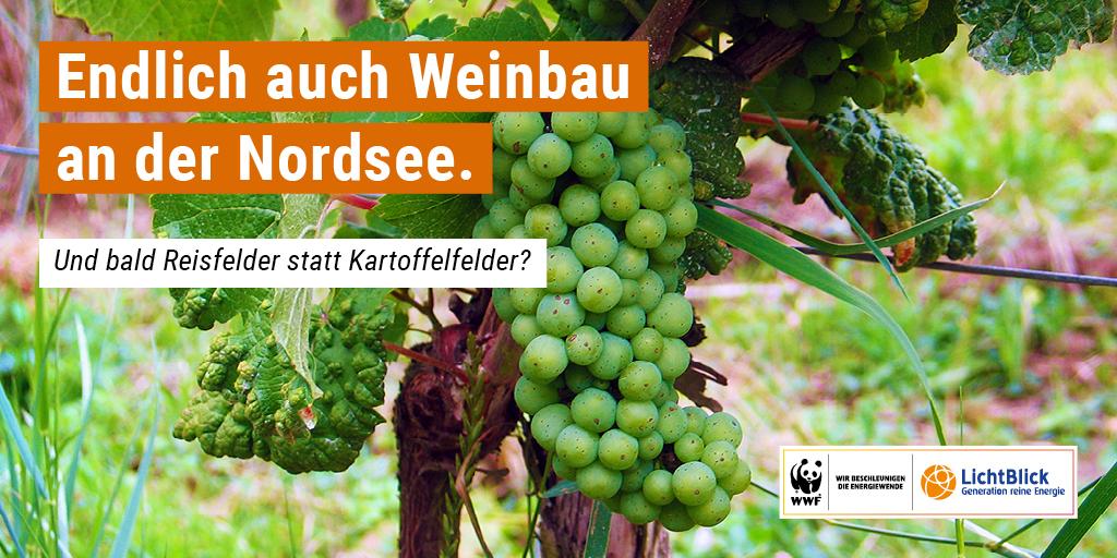 Hat der Klimwandel sogar Konsequenzen für den Weinanbau in Deutschland? © Bernward Bertram