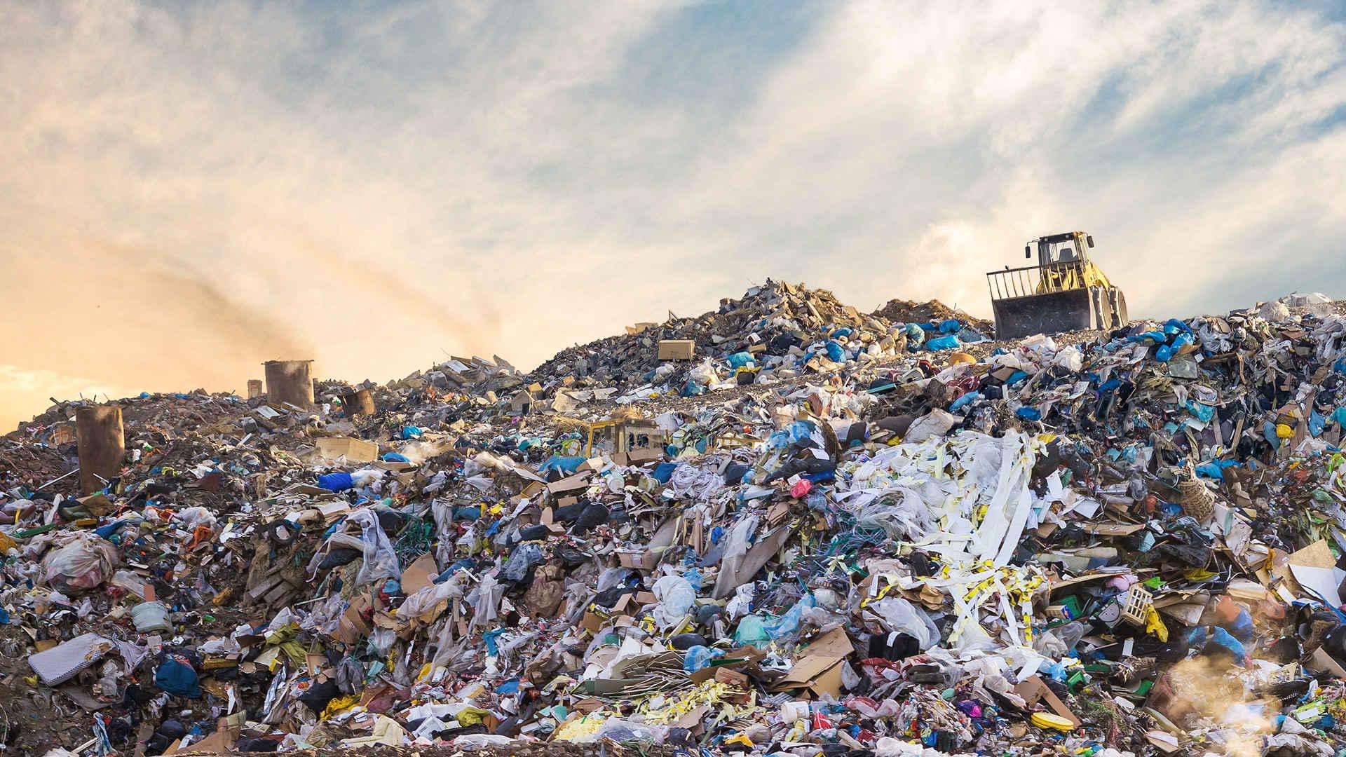 Lebensmittelverschwendung: Müllhalde