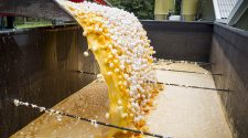 Lebensmittelverschwendung: Vernichtung von Eiern