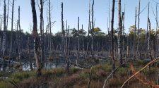 Auch in Brandenburg gibt es echte Wildnis wie die Moore der Lieberoser Heide. © Florian Schmidt / WWF