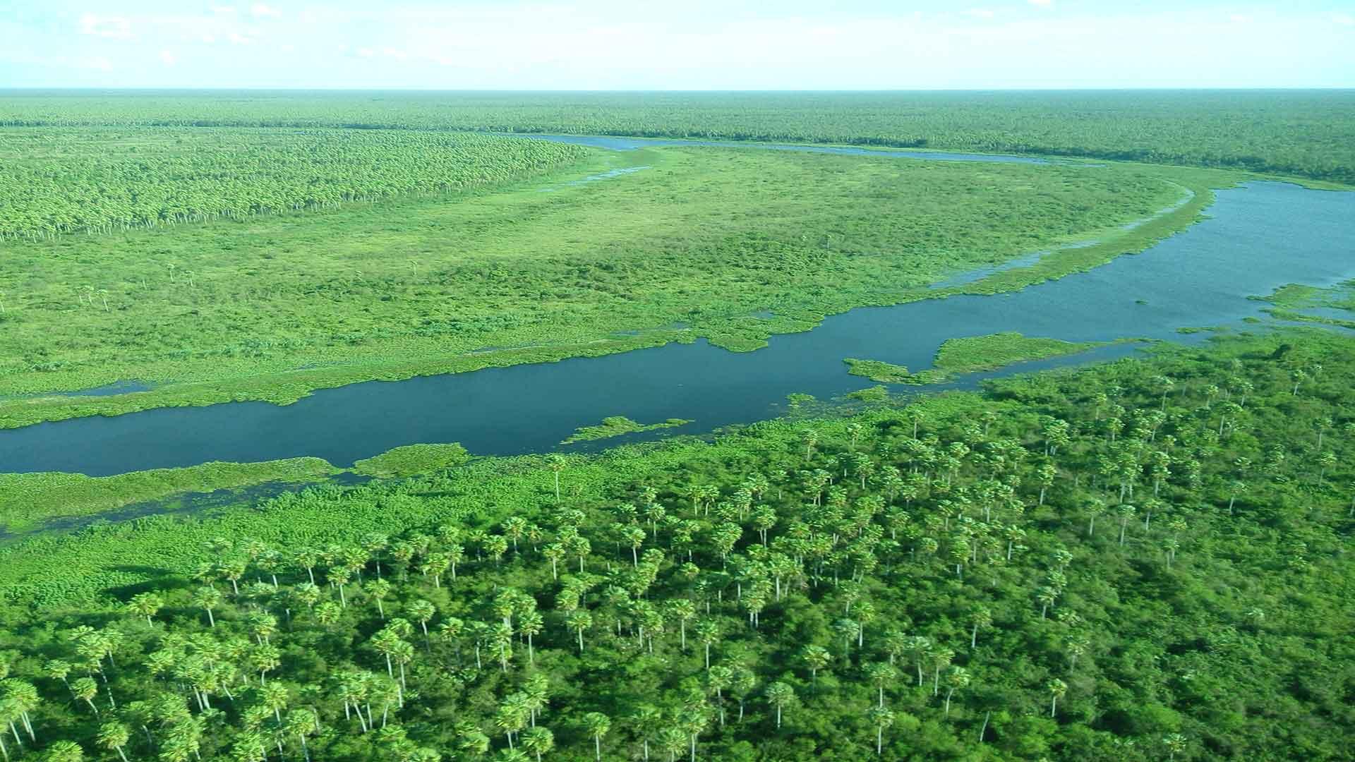 Das Pantanal ist eines der wichtigsten und größten Feuchtsavannen der Erde. © WWF / Ilka Petersen