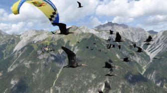 Waldrapp Projekt: Flug über die Alpen