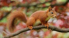 Sind die Eichhörnchen nach dem heißen Sommer wirklich dem Hungertod nahe? Müssen wir sie füttern? Was ist dran an der Sache? Und was ist mit anderen Wildtieren?