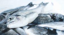 Fische auf dem Markt: Der Fischratgeber gibt antworten