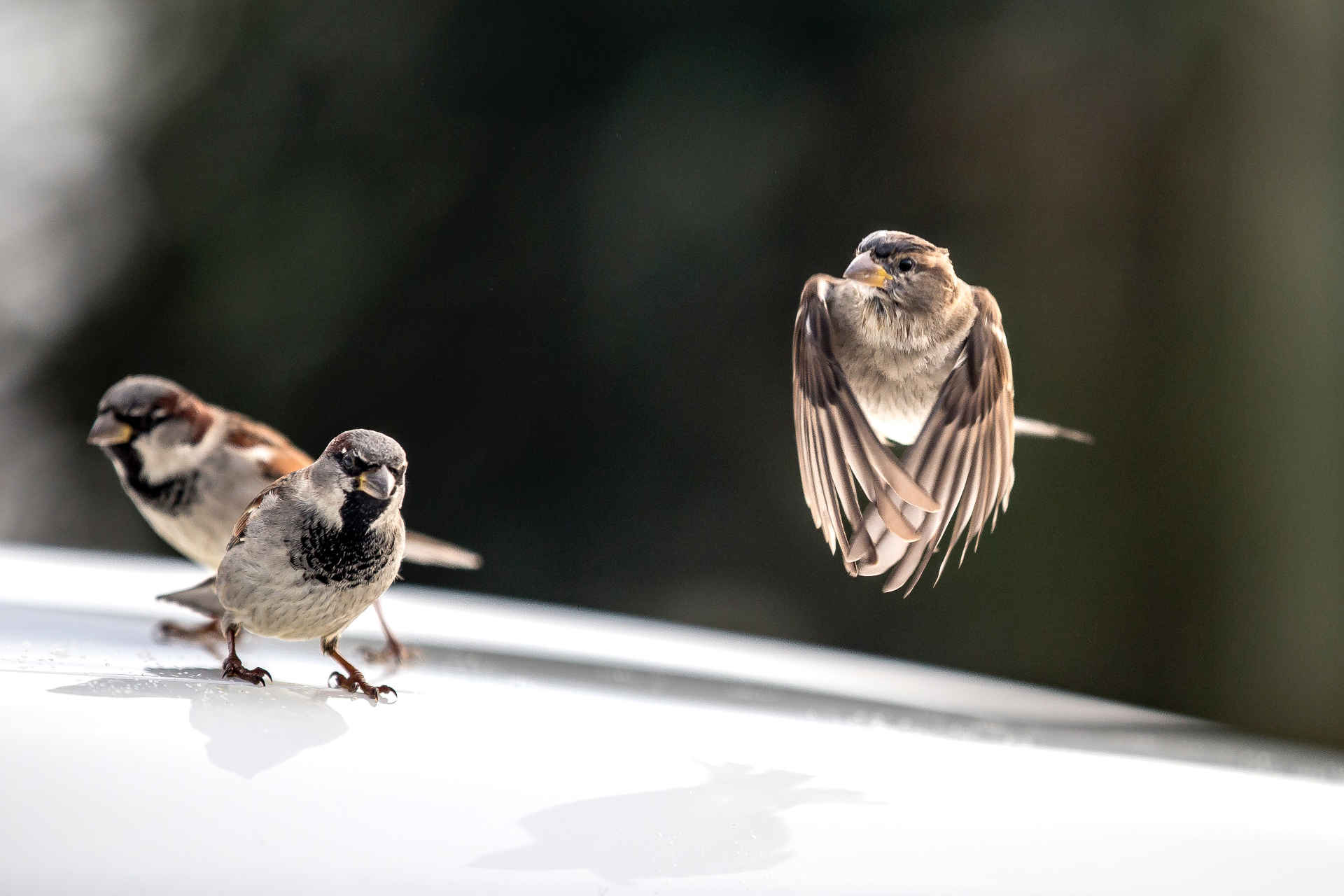 Vögel füttern oder nicht - das fragen sich viele im Herbst und Winter