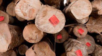 Baumstämme mit FSC Logo, Kolombangara Forest