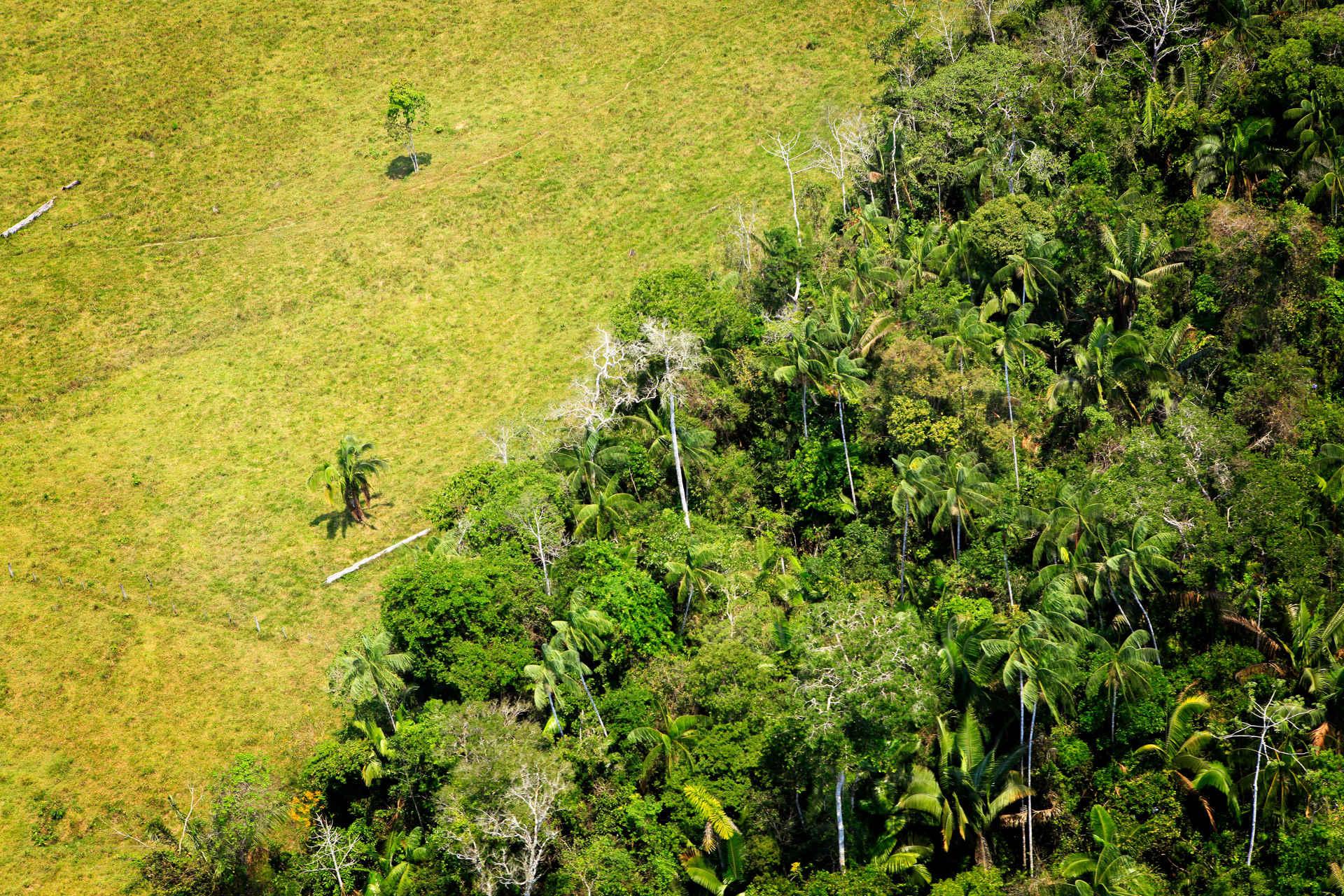 Klimaschutz Brasilien: Luftbild Amazonas mit Entwaldungsgrenze