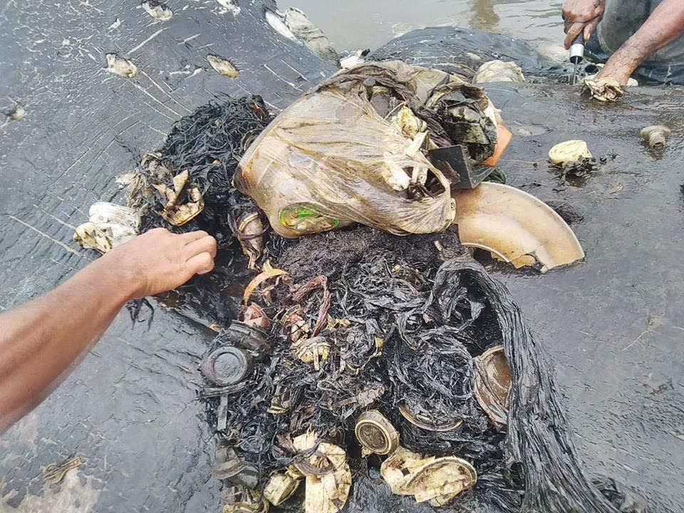 Plastikmüll: Der Mageninhalt des Wals
