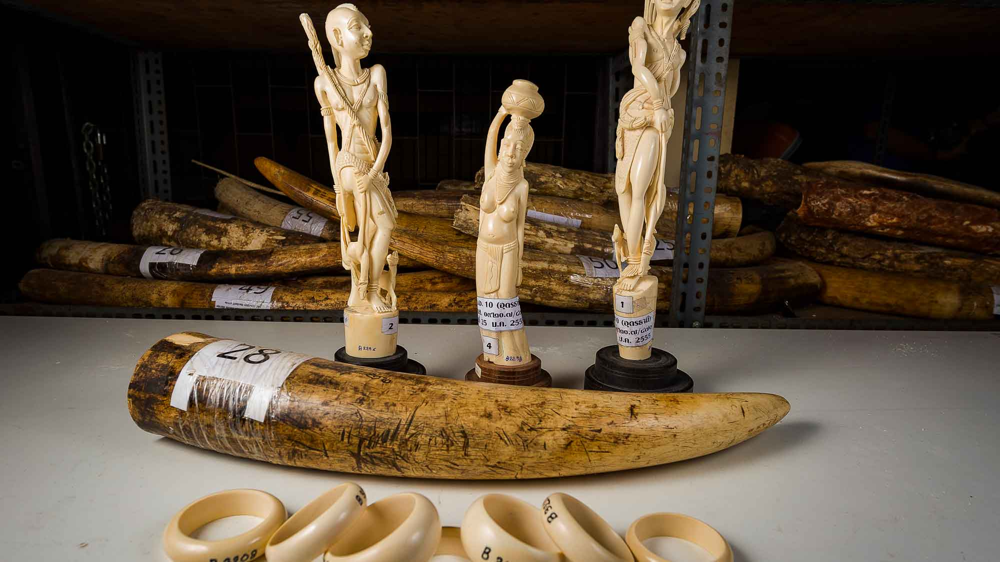 Die EU-Kommission hat vorgeschlagen, den Elfenbeinhandel zu verschärfen. © Ola Jennersten / WWF-Sweden