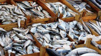 Nordsee Fisch: Fisch auf dem Markt