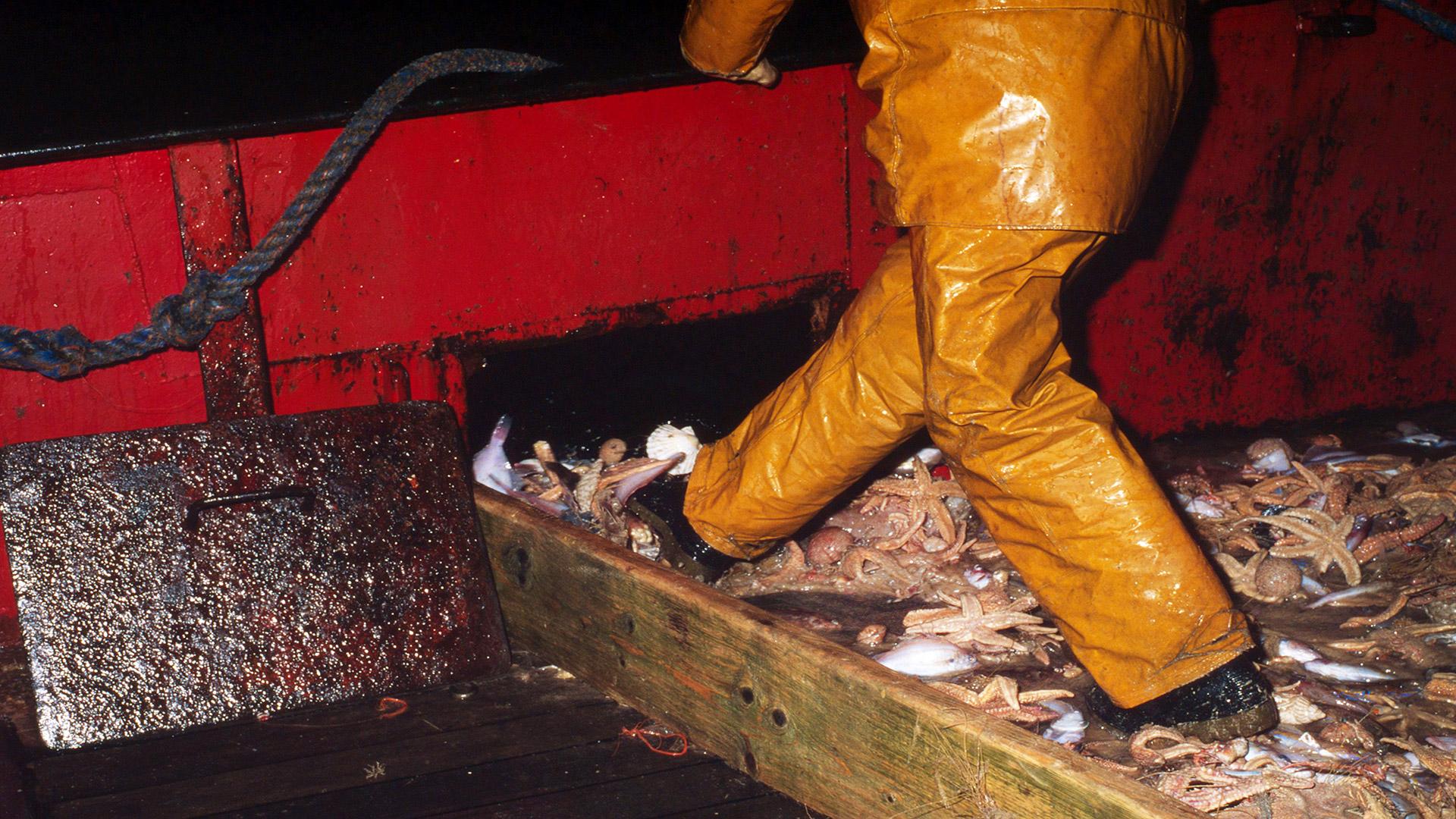 Für Shrimps etwa vier bis fünf Mal so viele andere Meerestiere als Beifang gefangen © Mike R. Jackson / WWF
