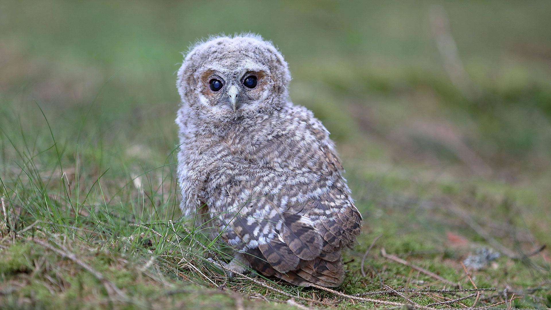 Vogel Aus Dem Nest Gefallen Was Tun Wwf Blog